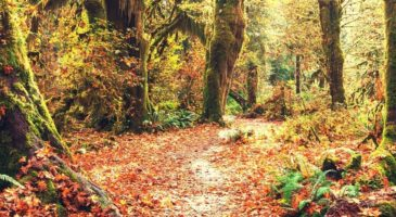 The 7 Most Useful Trees For Survivalists And Preppers